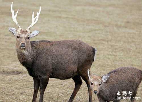 男子非法捕猎领角鸮判刑7年 中国濒危野生动物有哪些68 / 作者:UFO来啦 / 帖子ID:64984