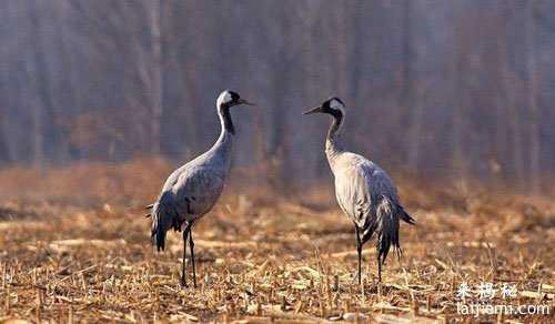 男子非法捕猎领角鸮判刑7年 中国濒危野生动物有哪些66 / 作者:UFO来啦 / 帖子ID:64984