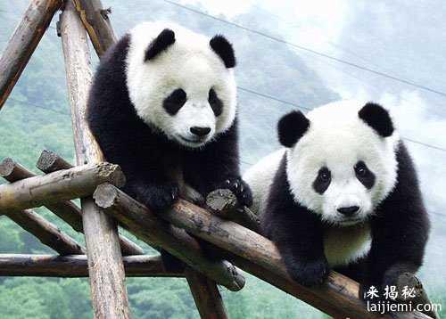 男子非法捕猎领角鸮判刑7年 中国濒危野生动物有哪些38 / 作者:UFO来啦 / 帖子ID:64984