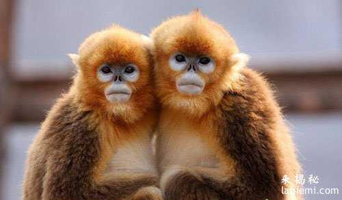 男子非法捕猎领角鸮判刑7年 中国濒危野生动物有哪些44 / 作者:UFO来啦 / 帖子ID:64984