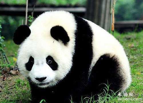 男子非法捕猎领角鸮判刑7年 中国濒危野生动物有哪些35 / 作者:UFO来啦 / 帖子ID:64984