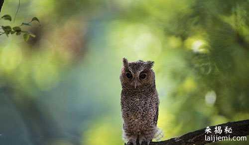 男子非法捕猎领角鸮判刑7年 中国濒危野生动物有哪些16 / 作者:UFO来啦 / 帖子ID:64984