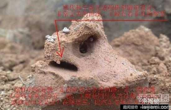 男子挖出巨型蚁穴:活捉30岁蚁后10 / 作者:UFO来啦 / 帖子ID:64981