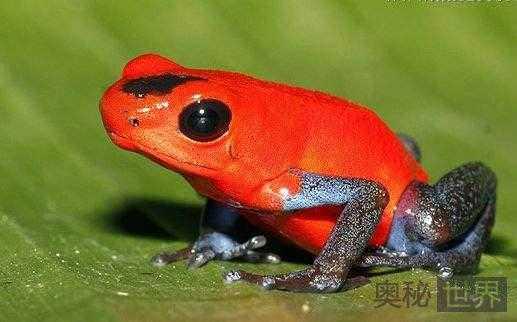 箭毒蛙的天敌是什么92 / 作者:UFO来啦 / 帖子ID:65433