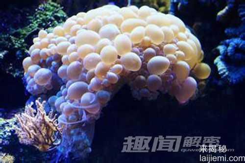 艳丽多姿!十大最美的海洋生物62 / 作者:UFO来啦 / 帖子ID:65618