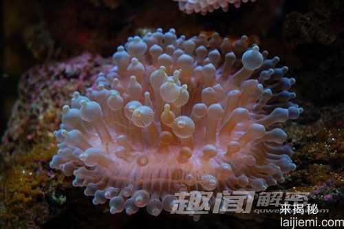 艳丽多姿!十大最美的海洋生物56 / 作者:UFO来啦 / 帖子ID:65618