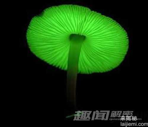 日本惊现会发绿光的蘑菇36 / 作者:UFO来啦 / 帖子ID:64117