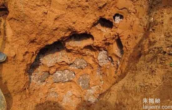 男子挖出巨型蚁穴:活捉30岁蚁后20 / 作者:UFO来啦 / 帖子ID:64981