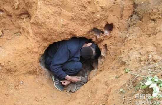 男子挖出巨型蚁穴:活捉30岁蚁后50 / 作者:UFO来啦 / 帖子ID:64981