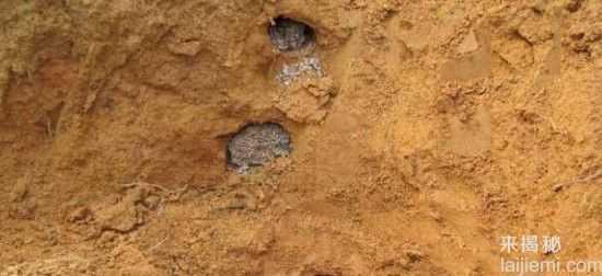 男子挖出巨型蚁穴:活捉30岁蚁后64 / 作者:UFO来啦 / 帖子ID:64981