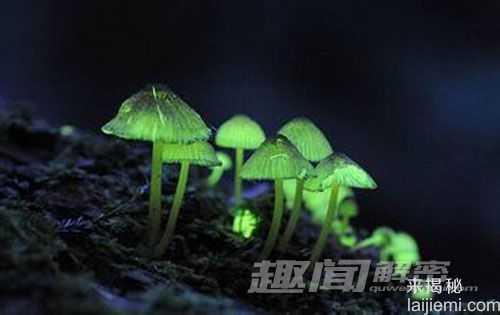 日本惊现会发绿光的蘑菇85 / 作者:UFO来啦 / 帖子ID:64117