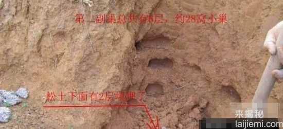男子挖出巨型蚁穴:活捉30岁蚁后15 / 作者:UFO来啦 / 帖子ID:64981