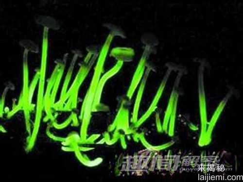 日本惊现会发绿光的蘑菇42 / 作者:UFO来啦 / 帖子ID:64117