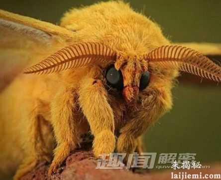 无奇不有!盘点地球上最奇特的十种生物36 / 作者:UFO来啦 / 帖子ID:64101