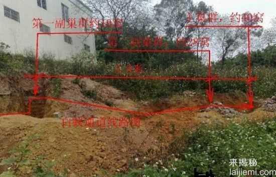 男子挖出巨型蚁穴:活捉30岁蚁后89 / 作者:UFO来啦 / 帖子ID:64981
