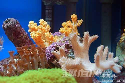 艳丽多姿!十大最美的海洋生物45 / 作者:UFO来啦 / 帖子ID:65618