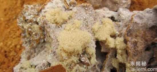男子挖出巨型蚁穴:活捉30岁蚁后85 / 作者:UFO来啦 / 帖子ID:64981