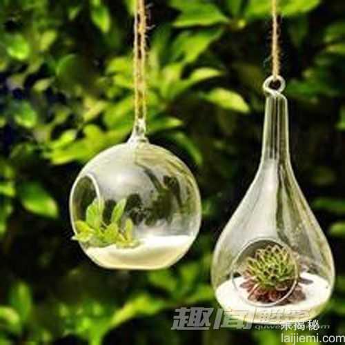 日本惊现会发绿光的蘑菇15 / 作者:UFO来啦 / 帖子ID:64117